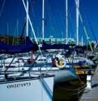 sailboats docked in a marina